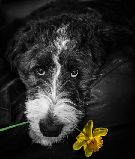 Please Don't Eat the Daffodils