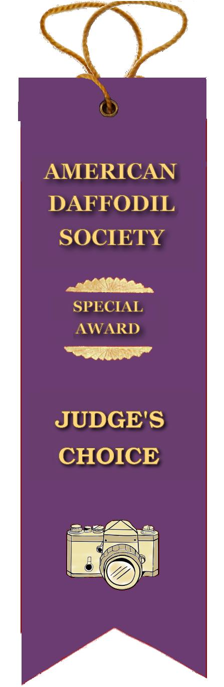 judges_choice